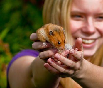 Breeding hamsters