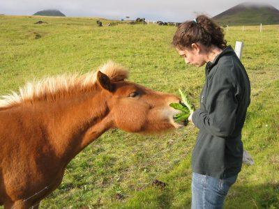 Pony breeding software