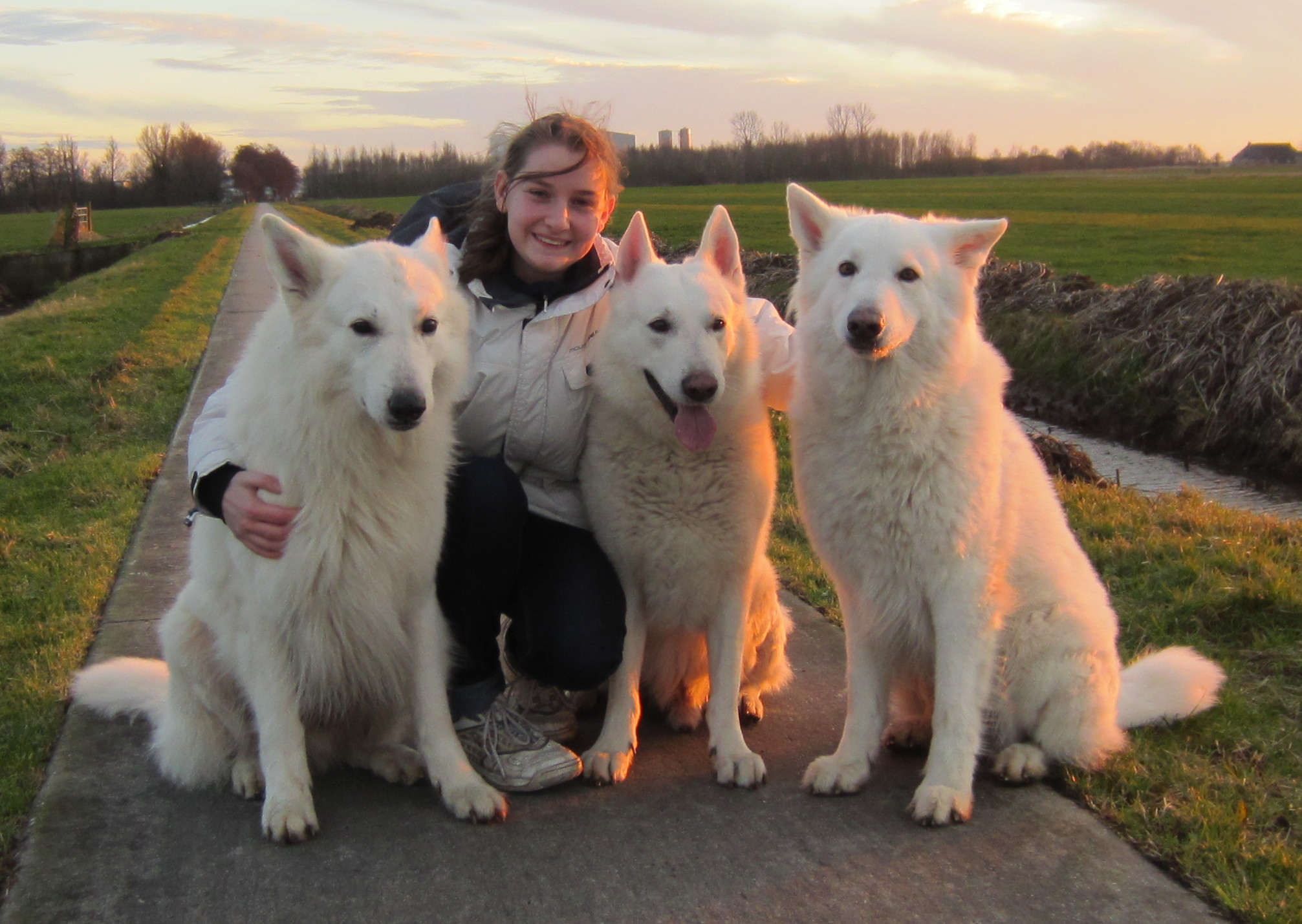 Breed Club for White Swiss Shepherds builds online database