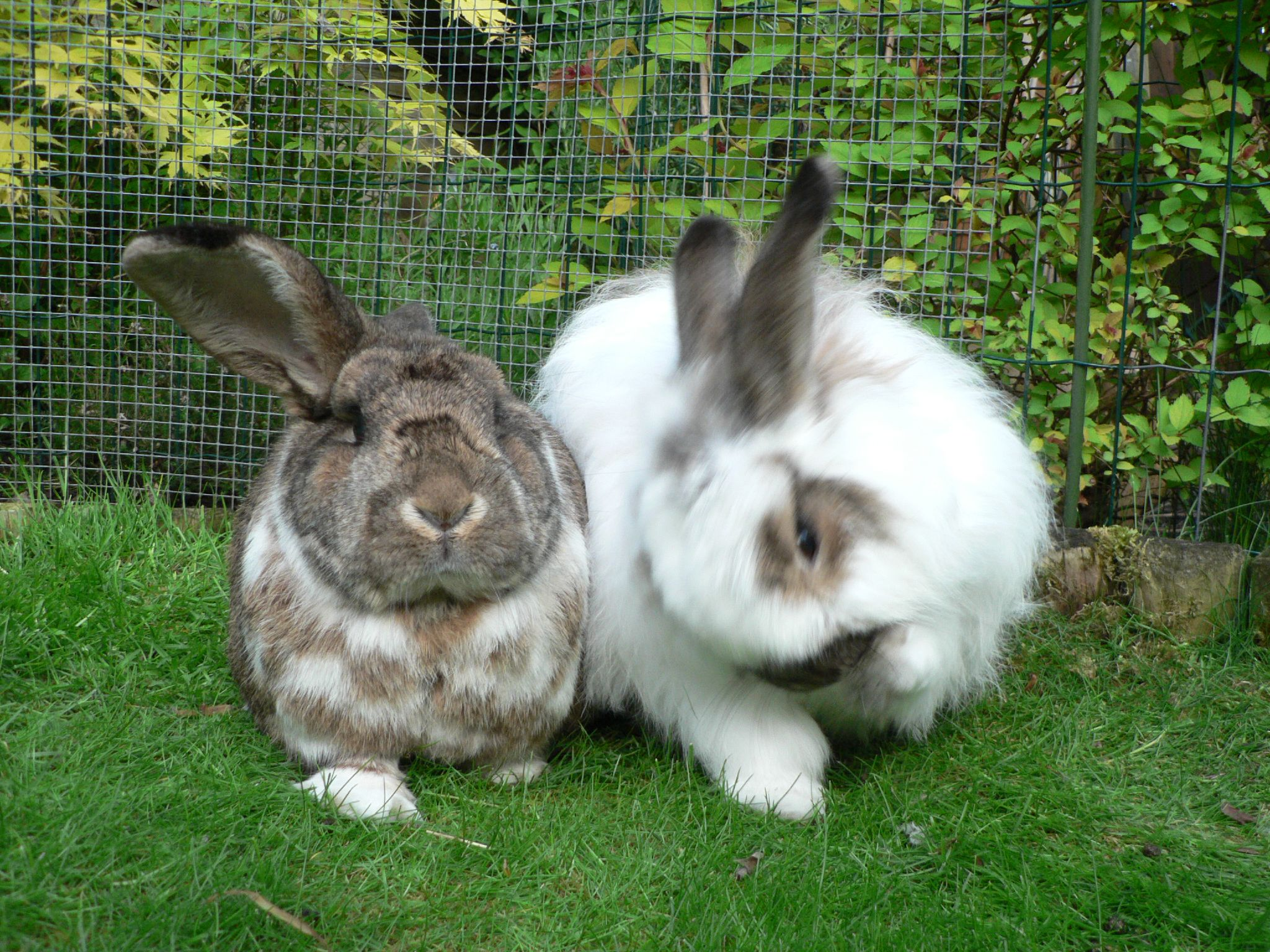 Raising Meat Rabbits To Save The World