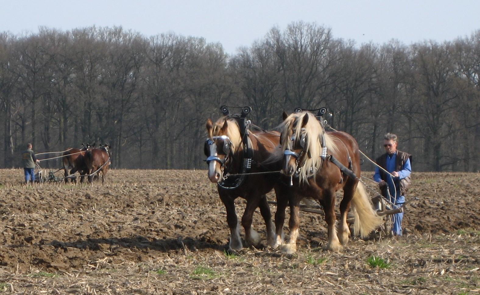 Breeding horses