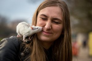 Breeding rats