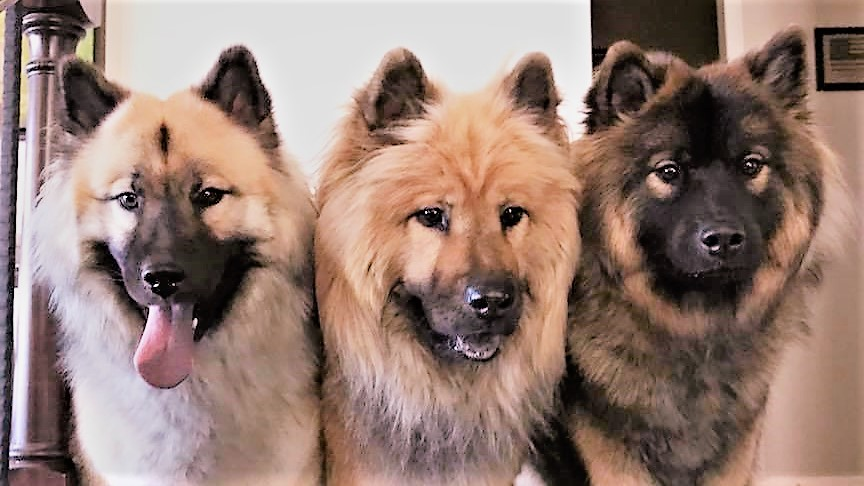United States Eurasier Club (USEC)