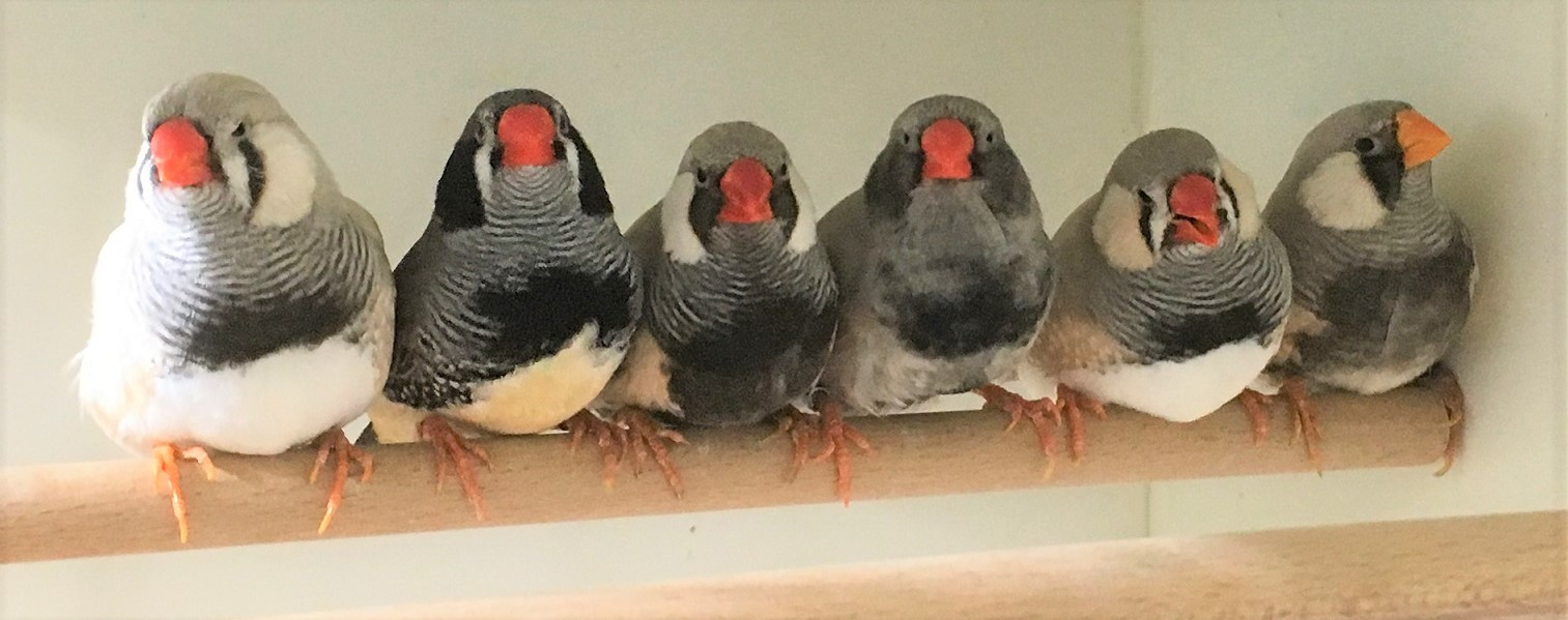 Breeding birds